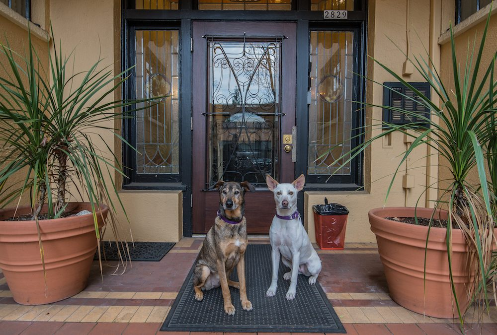 Pet-Friendly Belmont Condo